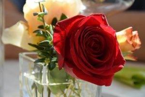 Blumen für Restaurant