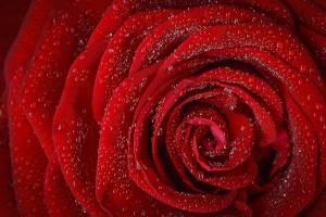 Blumen zum Valentinstag versenden
